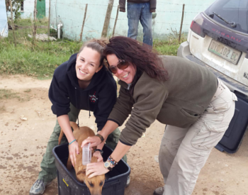 Get vital hands-on experience on our pre-vet program in africa
