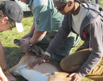 Browse wildlife and conservation volunteer programs